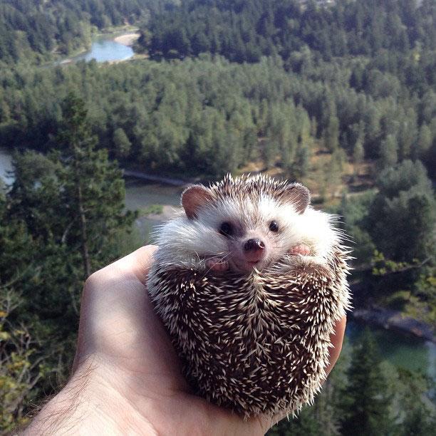 biddy the hedgehog world traveler instagram (4)