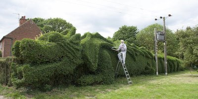 This Guy Spent 10 Years Making a Dragon-Shaped Hedge. His Reason Why is Amazing