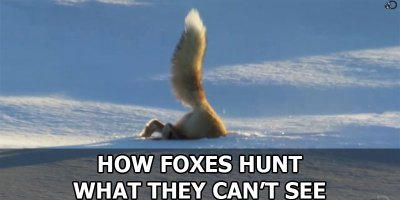 How Foxes Hunt What They Can't See