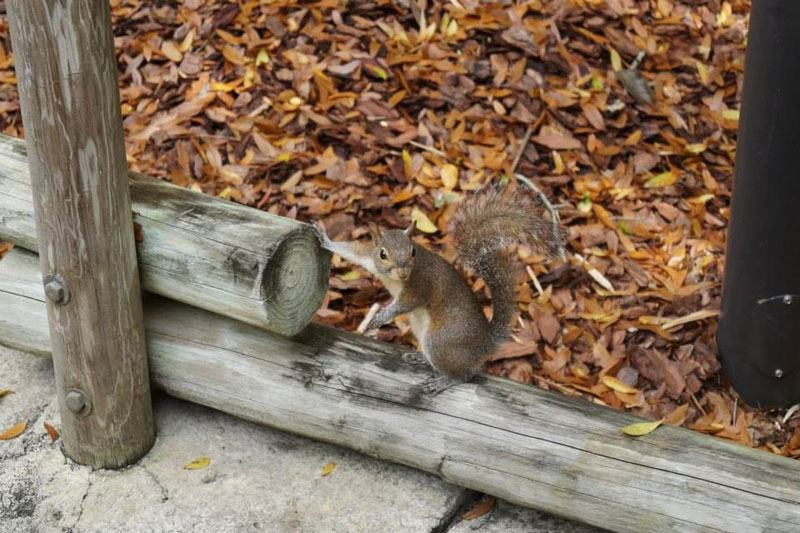 squirrel holding a gun The Shirk Report   Volume 264