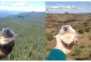 This is the World's Most Well-Travelled Hedgehog