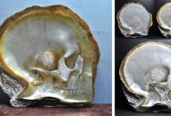 Hand Carved Skulls Into Mother of Pearl Shells