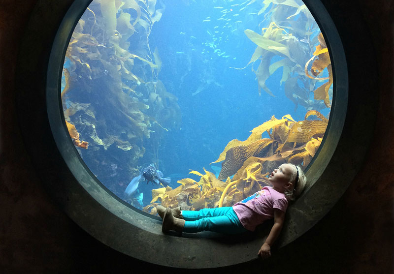 Picture of the Day: Awestruck at the Aquarium
