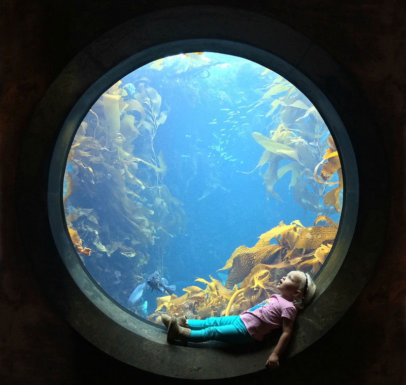 sitting in circular window at the aquarium The Top 50 Pictures of the Day for 2014