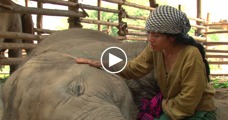 Rescued Elephant Falls Asleep to the Soothing Sounds of a Lullaby