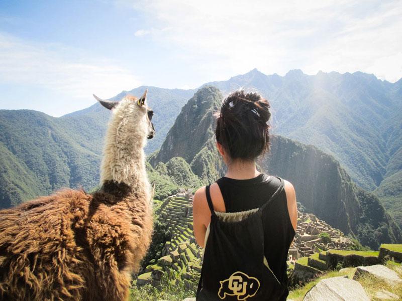 admiring machu picchu with a llama Picture of the Day: Admiring Machu Picchu with a Friend