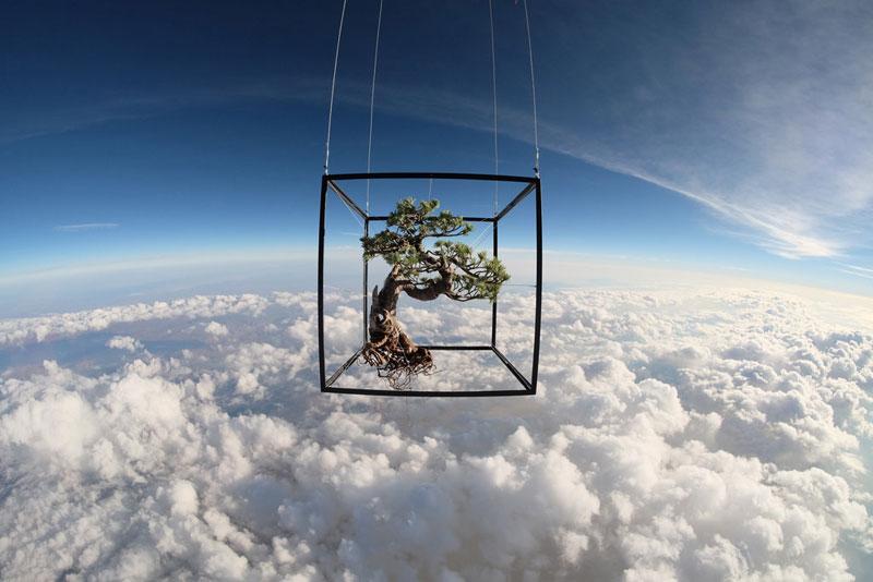 azuma makoto sends bonsai plant into space (1)