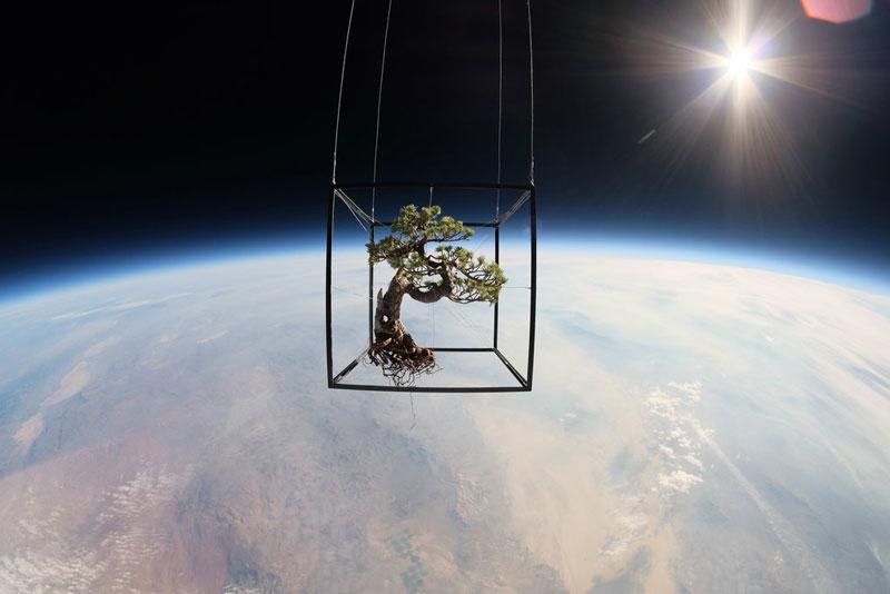 azuma makoto sends bonsai plant into space (2)