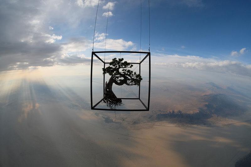 azuma makoto sends bonsai plant into space (3)