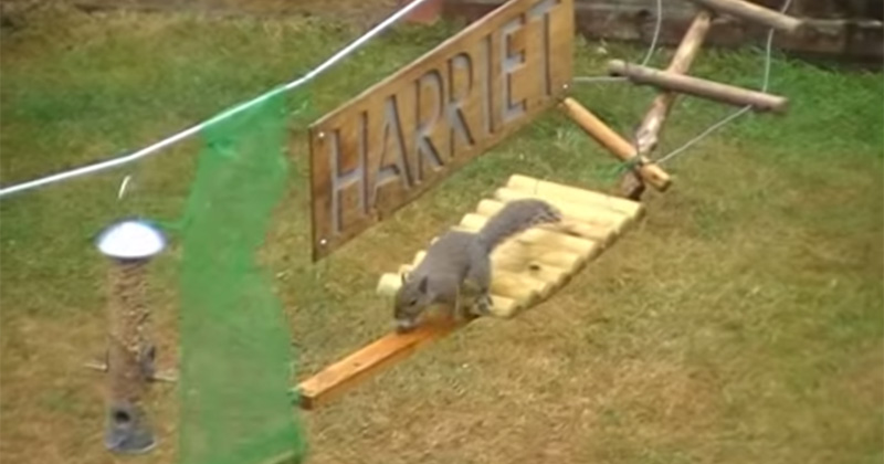 This Guy Built an Obstacle Course for Squirrels and Narrated their Progress