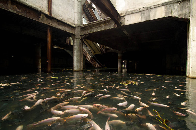 flooded abandoned mall with fish bangkok thailand Picture of the Day: An Abandoned Mall Overtaken by Fish