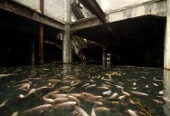 Picture of the Day: An Abandoned Mall Overtaken by Fish