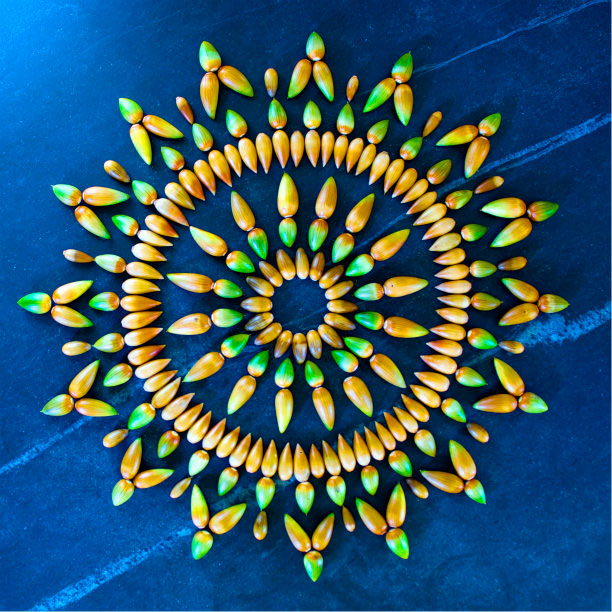 flower mandalas by kathy klein (4)