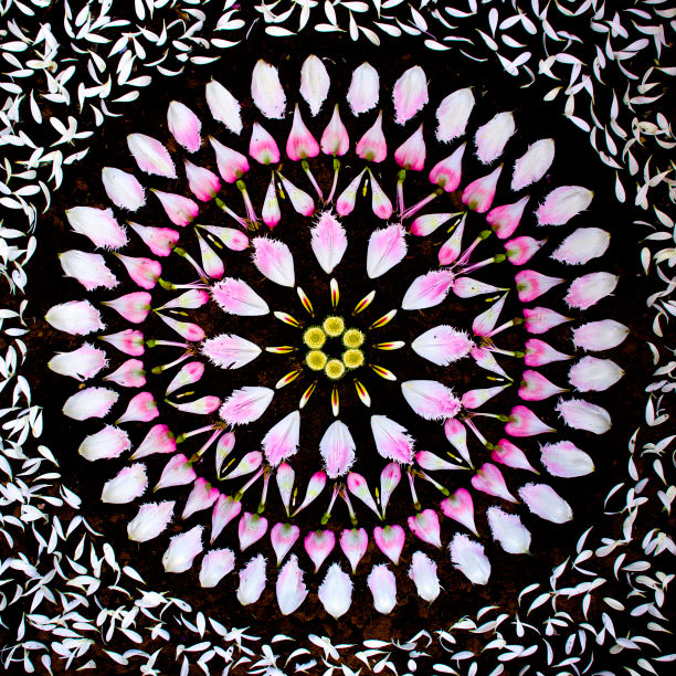 flower mandalas by kathy klein (5)