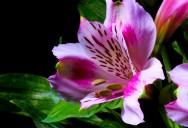 Breathtaking Timelapse Shows Flowers in Bloom