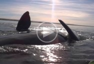 Kayak Gets Lifted Out of Water by Huge Whale
