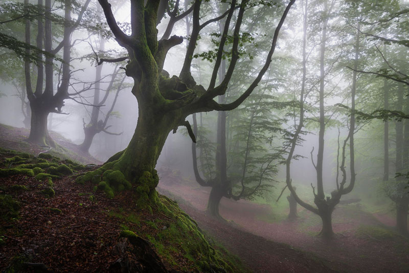 mystical forest in spain gorbea natural park 1 The Bluebells of Hallerbos, Belgium