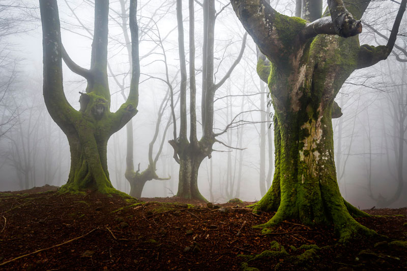 mystical forest in spain gorbea natural park (3)