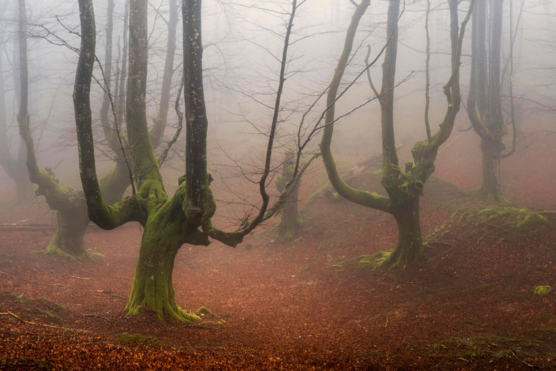 mystical forest in spain gorbea natural park (4)