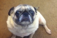 20 Seconds of Paranormal Pugtivity