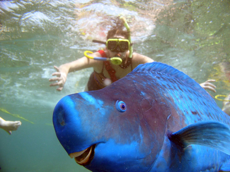 parrotfish photobomb Picture of the Day: This Parrotfish Photobomb is Perfect
