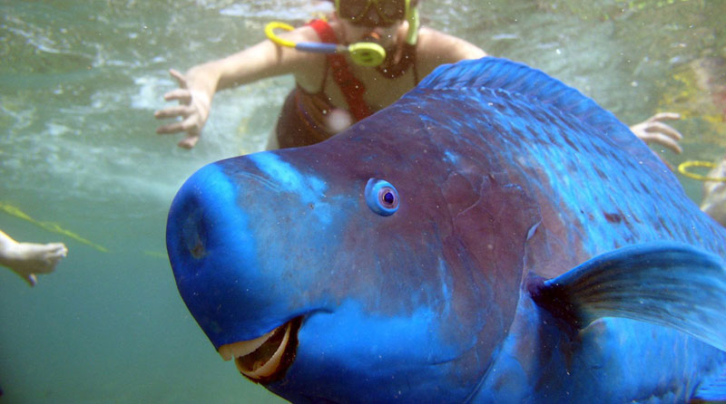 Picture of the Day: This Parrotfish Photobomb is Perfect