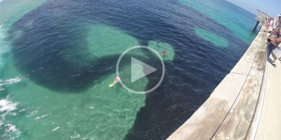 It Looks Like an Oil Spill but It's Actually a Huge School of Anchovy!