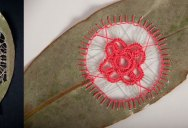 Stitching Leaves by Hillary Fayle
