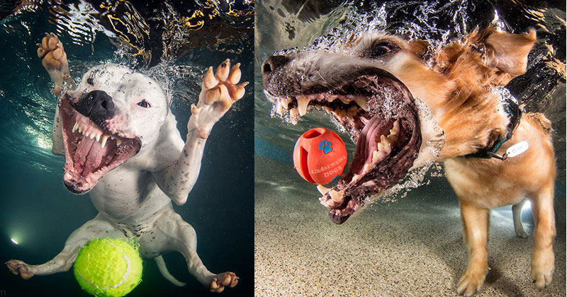 underwater photos of dogs fetching their balls by seth casteel 11 Portraits of Puppies Mid Shake