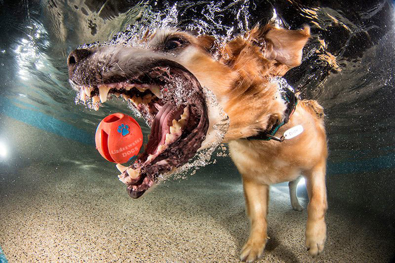 underwater photos of dogs fetching their balls by seth casteel (2)