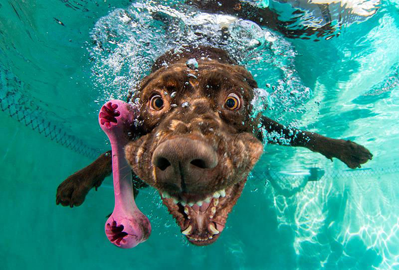 underwater photos of dogs fetching their balls by seth casteel (7)