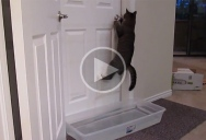 This Cat is Officially Unstoppable