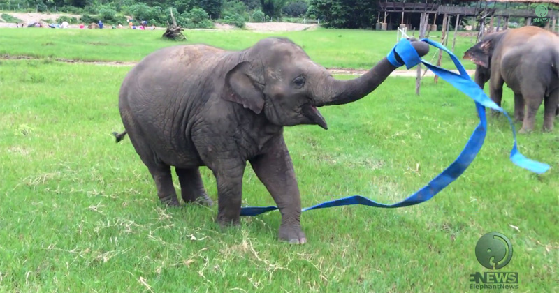 This Rescued Elephant Playing with Ribbon is the Best Thing You'll See Today