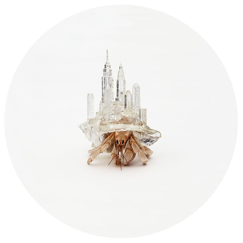 hermit crab glass city by aki inomata new york city