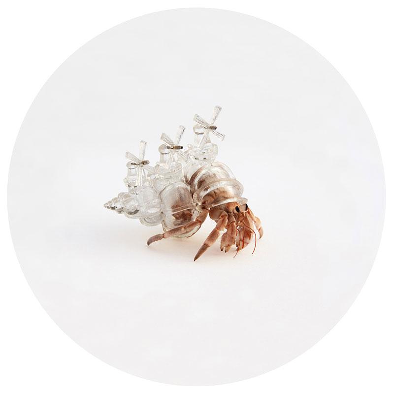 hermit crab glass city by aki inomata windmill