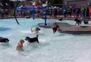 At the End of Each Season, this Pool has a Day Just for Dogs