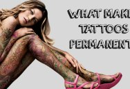 The Science Behind a Tattoo's Permanence