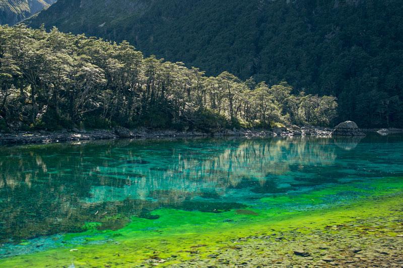 worlds clearest lake blue lake nelson nz (2)