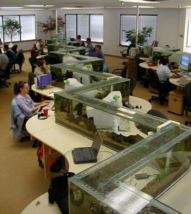 zig zag office aquarium also a desk divider (1)