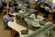 Office Aquarium Doubles as Desk Divider