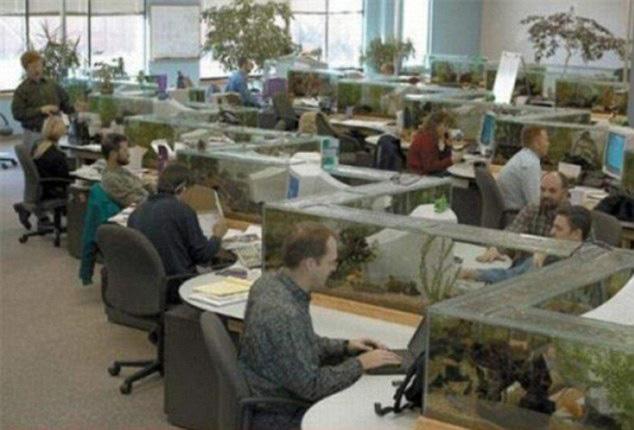zig zag office aquarium also a desk divider (2)