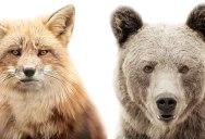 Animal Portraits on Stark White Backgrounds by Morten Koldby