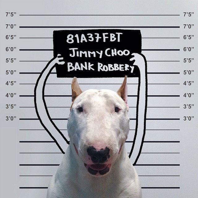 Rafael mantesso Takes Portraits of His Bull Terrier and Illustrates the Background (12)