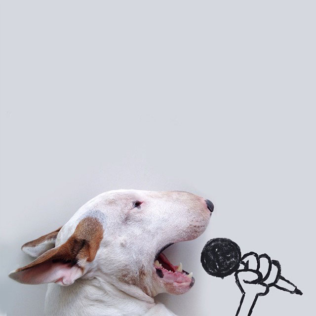Rafael mantesso Takes Portraits of His Bull Terrier and Illustrates the Background (7)
