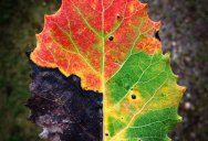 Picture of the Day: A Leaf for All Seasons