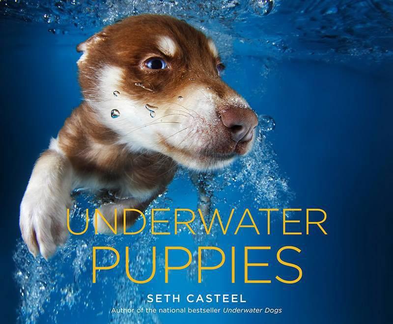 underwater puppies by seth casteel (1)