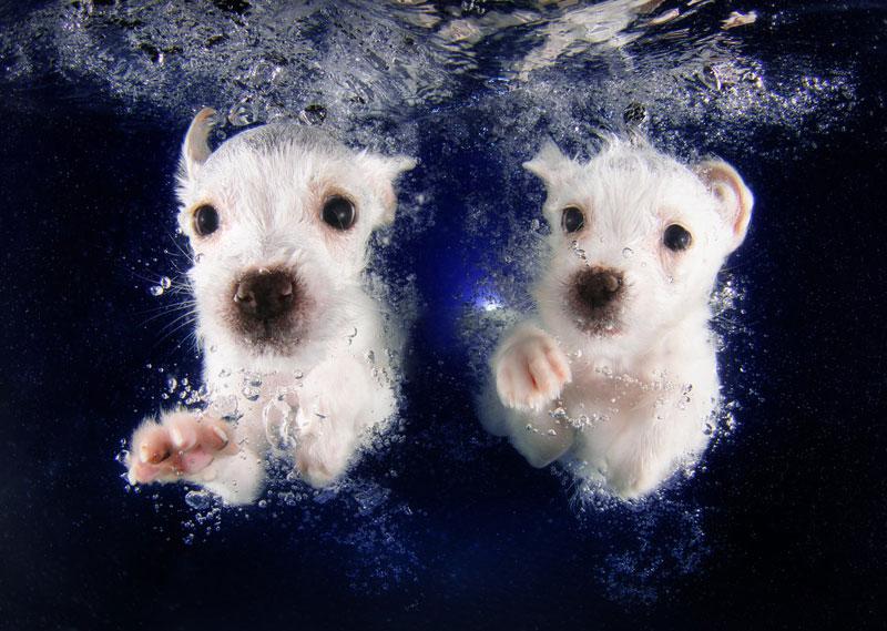 underwater puppies by seth casteel (7)