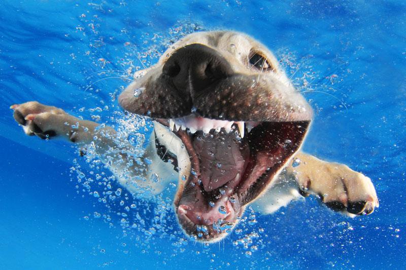 underwater puppies by seth casteel (8)