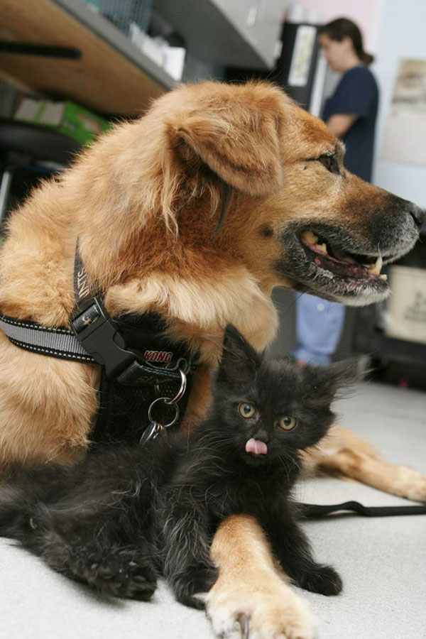 boots the kitten nanny arizona humane society (8)