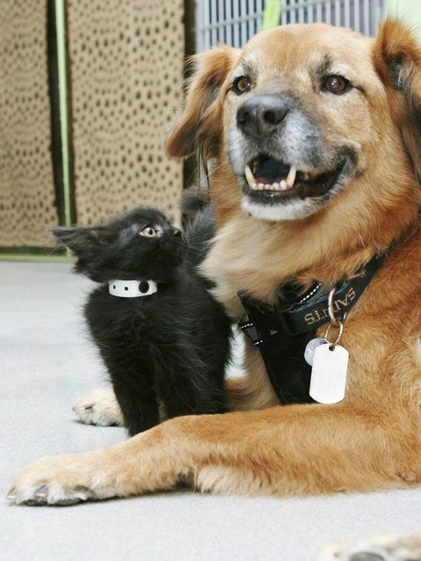 boots the kitten nanny arizona humane society (9)